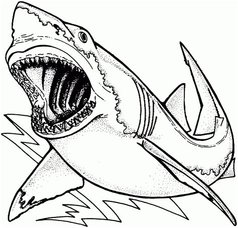 Coloring Page Shark by Hammerhead Shark Coloring Pages Free Free Coloring Books