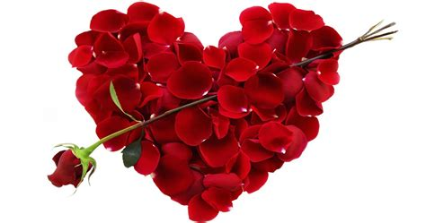 top 10 flowers for valentines day top 10 best flowers for s day to gift