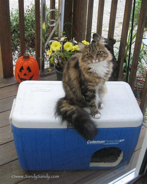 outdoor cat house for winter outdoor cat house make outdoor cat house cooler