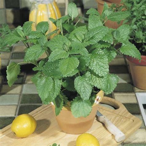 growing herbs indoors under lights 12 best herbs to grow indoors indoor herbs balcony