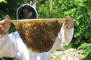 New sun hive experiment