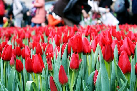 Tas Set Tulip netherlands events in 2016 a monthly guide dutchreview