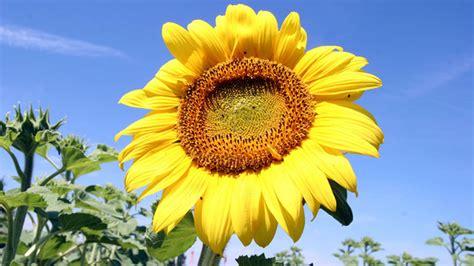 pflanzen pflanzen pflanzen sinne der pflanzen pflanzen natur planet
