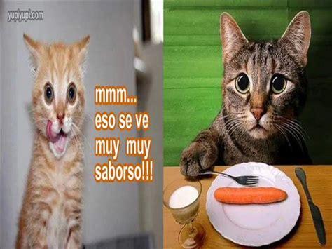 imagenes chistosos de gatos image gallery imagenes de gatos chistosos