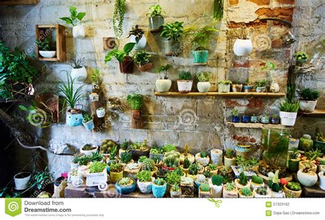 Floral Stores by Flower Shop Stock Photo Image Of Sale Plants Interior