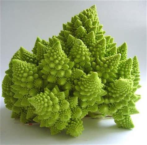 cucinare broccolo verde cucina italiana italian food il cibo con il