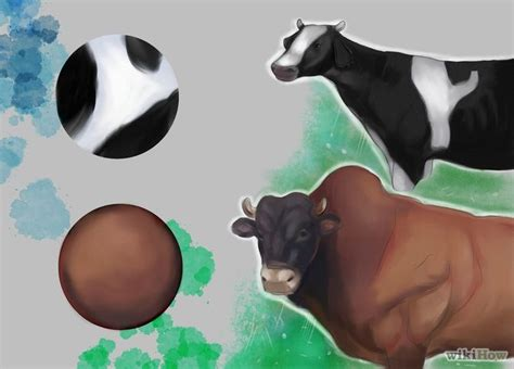 identify breed by characteristics how to identify cattle breeds 4 steps with pictures wikihow