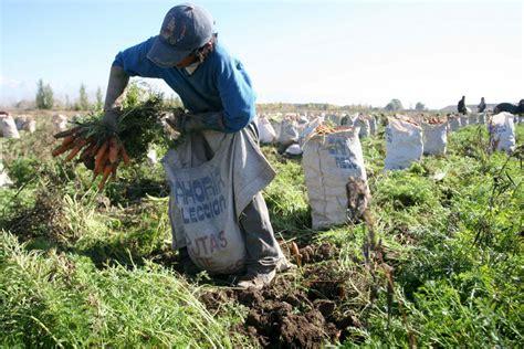aumentos a trabajadores rurales 2016 trabajadores rurales cobrar 225 n bono de fin de a 241 o de 2