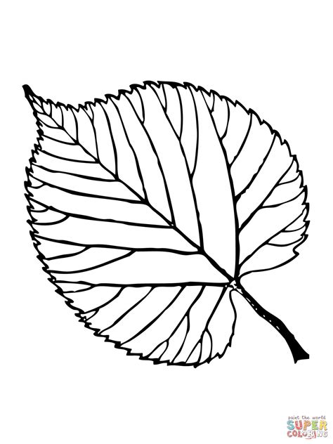 basswood leaf coloring page free printable coloring pages