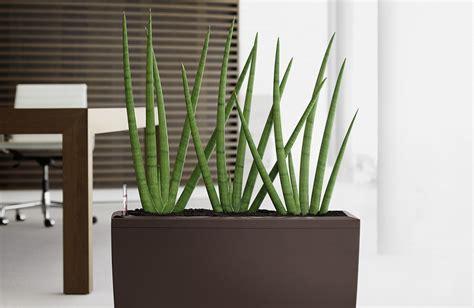 moderne zimmerpflanzen zimmerpflanzen