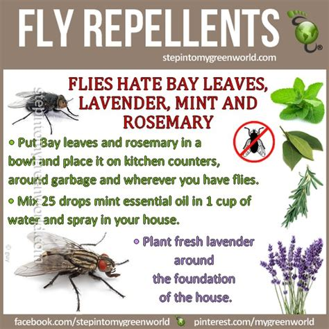 25 unique get rid of flies ideas on flies