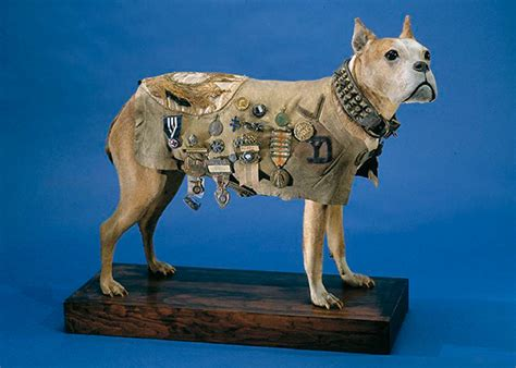 Sergeant Stubby Perros De Guerra On War Dogs Wwi And Photo Postcards