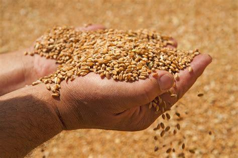 company eliminates pests  stored grain  ozone