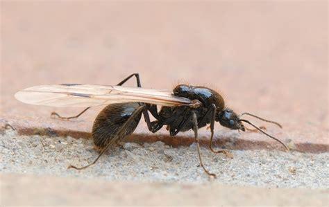 imagenes de la vida de las hormigas hormiga c 243 mo se comunican qu 233 comen tipos de hormigas