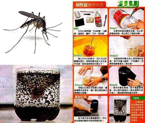 How To Kill Mosquitoes In Home | how to kill mosquito with sugar and yeast cknaija s blog