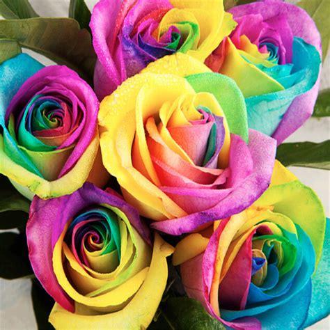 color roses 200pcs bulk rainbow flower seeds multi color