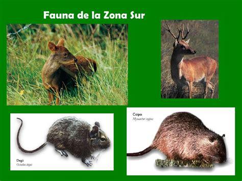 fotos animales zona sur de chile zona sur