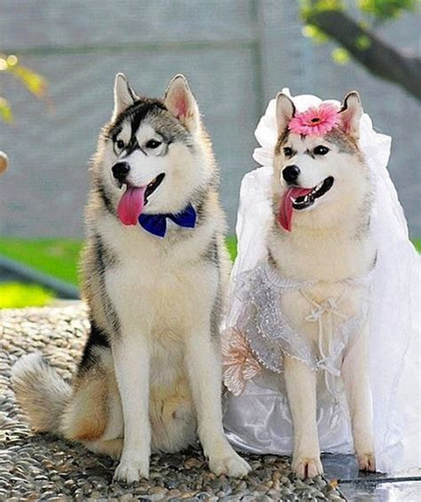 puppy wedding 10 dogs who are totally in and getting married