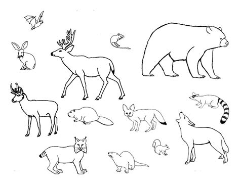 imagenes de animales mamiferos para dibujar imagenes de mamiferos para colorear animales para colorear