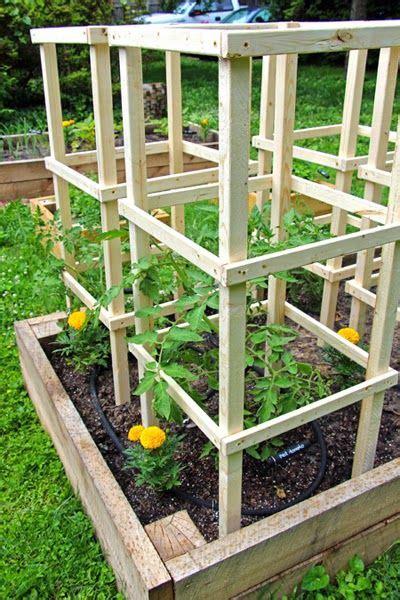 tomato plants   big   tiny tomatoes