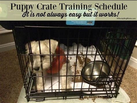 crate training puppy crate training schedule