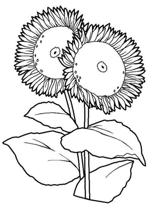 Coloriage Fleurs De Tournesol Hugolescargot Com