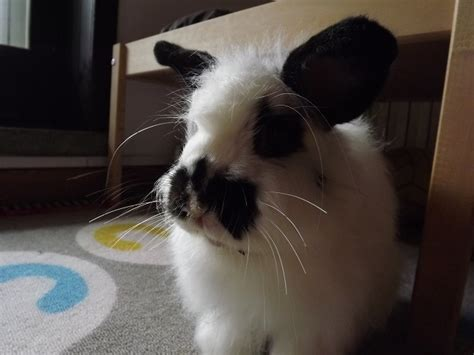 come posso cucinare il coniglio coniglio trasporto in automobile coniglio