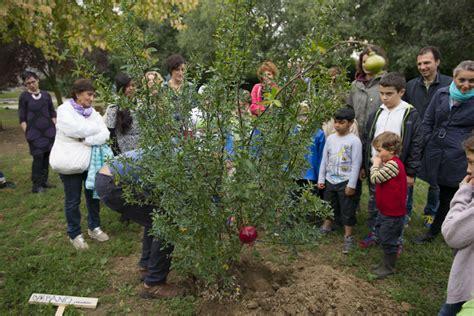 libreria sant orsola urbano il nuovo albero giardino di sant orsola