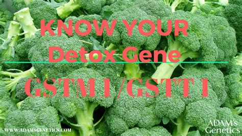 Detox Gene by Gene In Focus Gstm1 Gstt1 Or Detox Gene Adam S Genetics