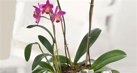 orchidee fiori appassiti piante di orchidee orchidee orchidee piante