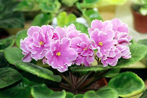 how to make of indoor flowering plants