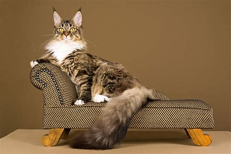 can a and cat mate do you your cat s breed does it matter or not catster