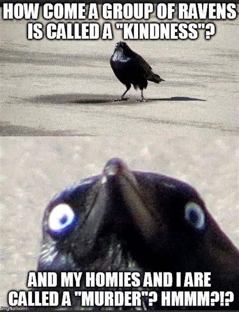 insanity crow imgflip