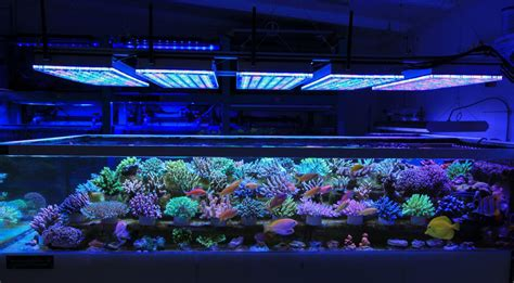 reef with lights led aquarium reef light orphek