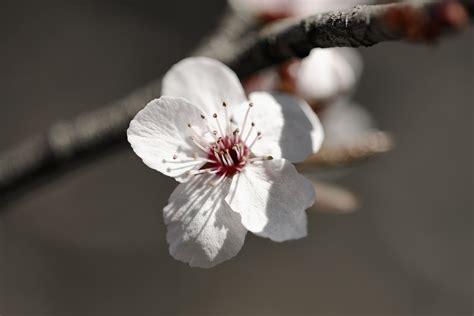 single cherry images