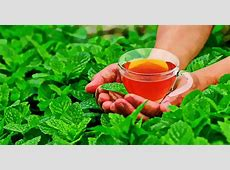 7 Peppermint Tea Benefits You Didn't Know About Apple Cider Vinegar Benefits For Skin