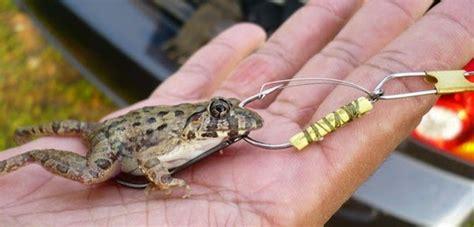 jenis umpan hidup  memancing ikan  jitu