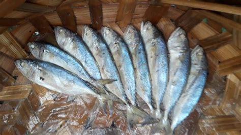 beli ikan rebus lauk pauk kesukaan  sumut  pekan
