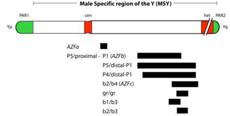 Y chromosome microdeletion Y Chromosome Microdeletion
