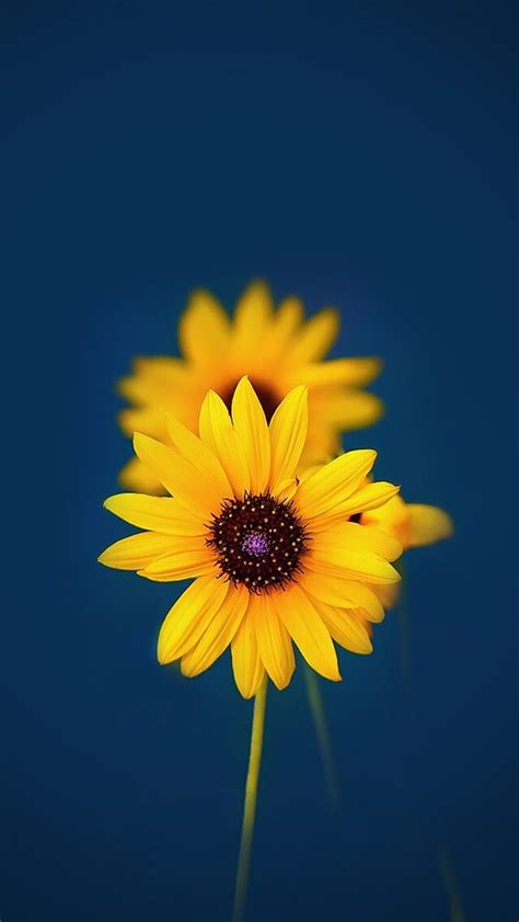 yellow  blue flower iphone wallpaper wallpapers