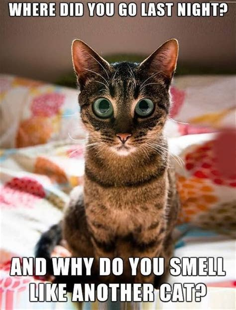 Cat Funny Meme - 30 hilarious cat memes quotes and humor