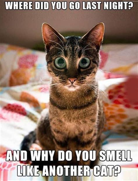Cat Funny Meme