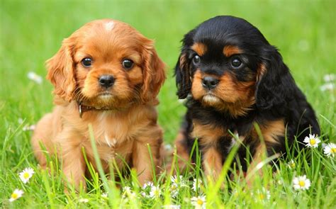 puppy co rise in puppies because click and collect generation do not think about the