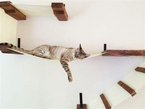amache per gatti percorsi per gatti con tanto di lettini e tiragraffi