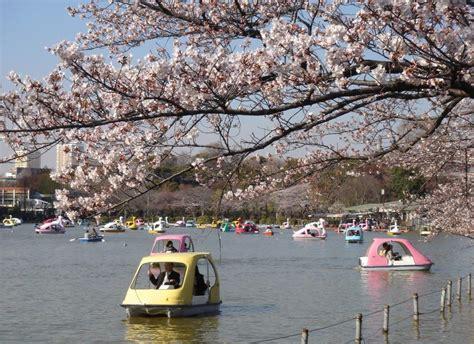 in park boating in ueno park in tokyo