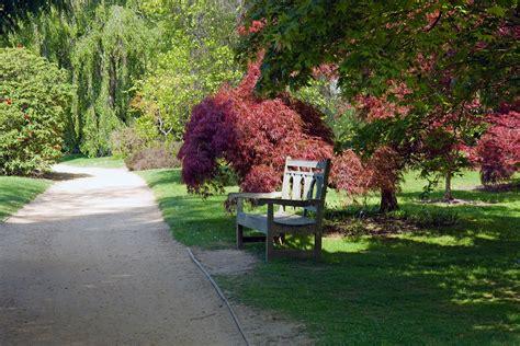 Sunlit Gardens sunlit garden bench free stock photo domain pictures