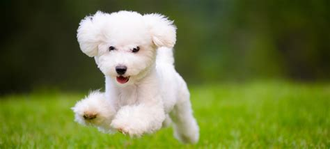 facts about dogs and puppies 100 facts about dogs interesting facts about dogs