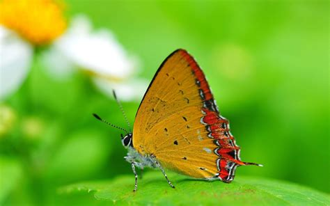 new themes butterfly latest nature wallpapers 2015 hd wallpaper cave