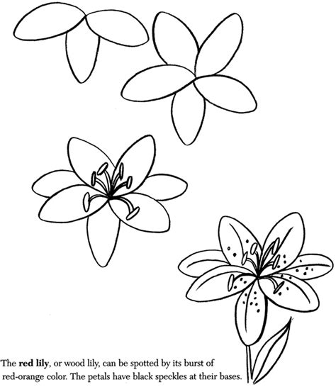 how to draw flower doodle how to draw a for my budding artist worksheets
