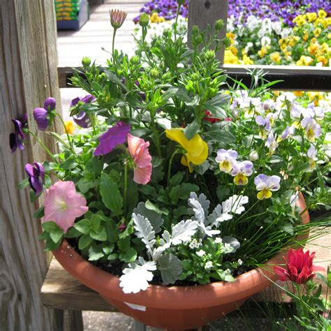 Pansy Garden Ideas Container Gardening Idea Dusty Miller Pansy Garden Ideas
